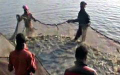 কিশোরগঞ্জের ২ যুবক মাছ চাষ করে স্বাবলম্বী