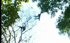 শতবছরে পদার্পন করলো মৌলভীবাজারের লাউয়াছড়া বন