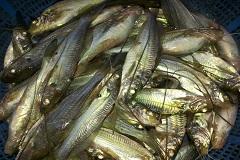যে ৯টি টিপস জানলে মাছ কিনে কখনও ঠকবেন না