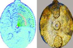প্রাচীন জ্যোতির্বিজ্ঞান যন্ত্রের সন্ধান