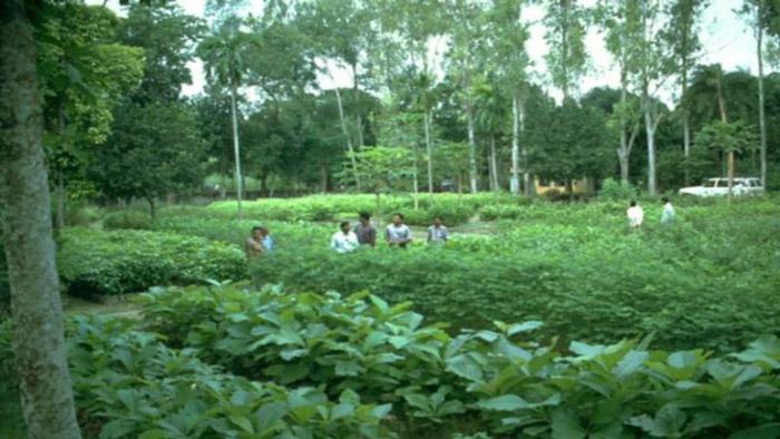 'দেশের ২৪ শতাংশ বৃক্ষ আচ্ছাদিত এলাকায় উন্নীত হবে'
