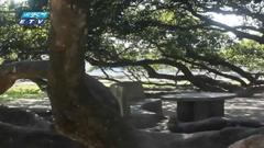 ২শ' বছরের পুরোনো আমগাছ দেখতে দর্শনাথীদের ভিড় (ভিডিও)