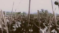 আজ ঐতিহাসিক ১৪ মার্চ