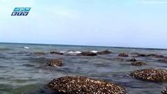 ঘুরে আসুন প্রবালদ্বীপ সেন্টমার্টিন (ভিডিও )