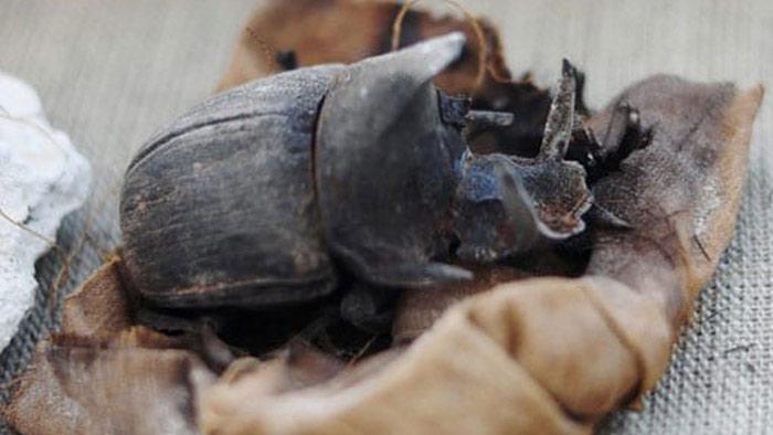 মিশরে ৪৫০০ বছরের প্রাচীন পোকার মমির সন্ধান