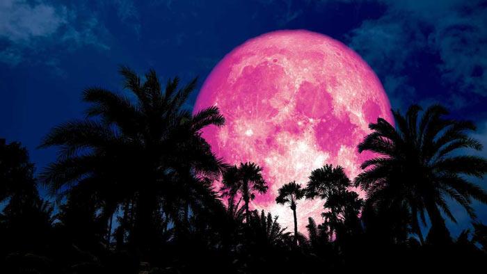 গোলাপি চাঁদ অর্থাৎ 'পিঙ্ক মুন' দেখবে বিশ্ববাসী