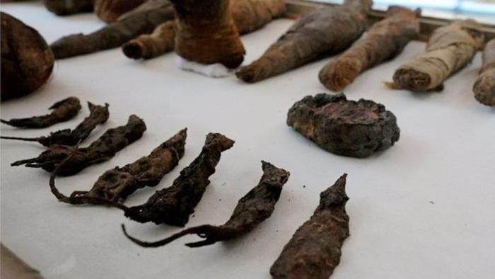 মিশরের সমাধিক্ষেত্রে পাওয়া গেল ইঁদুরের মমি