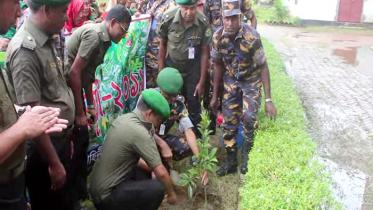 কুমিল্লায় আনসার ও গ্রাম প্রতিরক্ষা বাহিনীর বৃক্ষরোপন