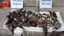 লালমনিরহাটে ধান চাতালে বিষ দিয়ে পাখি হত্যা