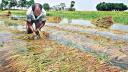 করোনায় কৃষকের ক্ষতি ৫৬ হাজার কোটি টাকা