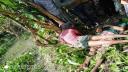 পিরোজপুরে বিদ্যুৎস্পৃষ্টে ২ জনের মৃত্যু