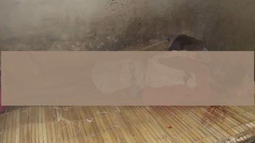 ঠাকুরগাঁওয়ে বাবাকে কোদাল দিয়ে কুপিয়ে হত্যা করল ছেলে