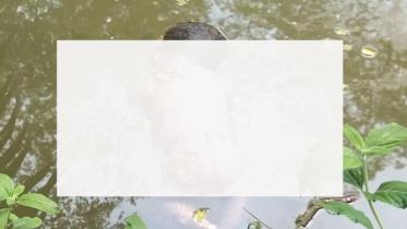 বাউফলে পুকুরে মিলল নবজাতকের ক্ষতবিক্ষত লাশ