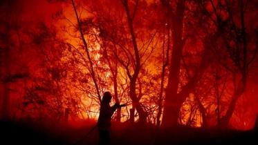 অস্ট্রেলিয়ার দাবানল অব্যাহত, আগুনে পুড়ে দমকল কর্মীর মৃত্যু
