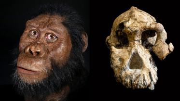 ৩.৮ মিলিয়ন বছর আগের মাথার খুলির সন্ধান