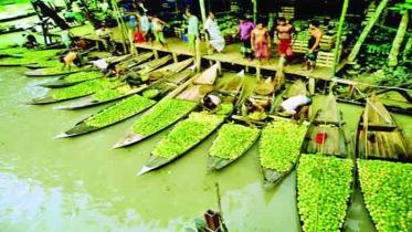 দর্শনার্থীদের পদচারণায় জমজমাট ভাসমান পেয়ারা বাজার
