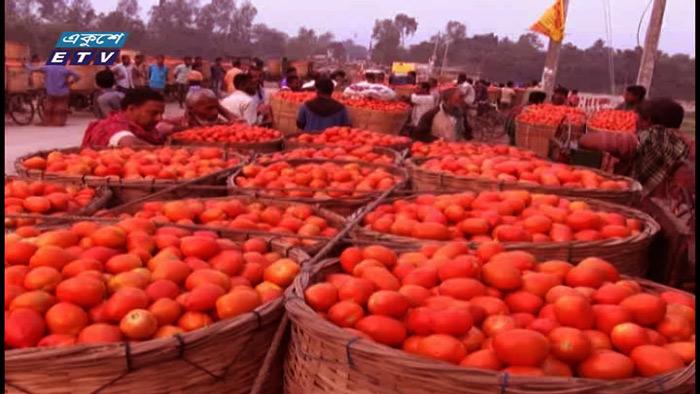 দিনাজপুরে জমজমাট গ্রীষ্মকালীন টমেটোর বাজার (ভিডিও)