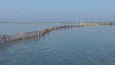 সুনামগঞ্জে সরকারি জলমহালে অবৈধভাবে মাছ শিকার