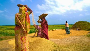দরজায় কড়া নাড়ছে হেমন্তের হিমেল হাওয়া