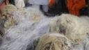 মোংলায় এক হাজার মিটার 'অবৈধ জাল' জব্দ