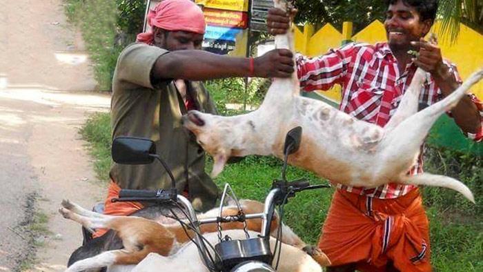 ভারতে এক ভ্রাম্যমান দোকান থেকে কুকুর বিক্রি হচ্ছে- টাইমস অব ইন্ডিয়া