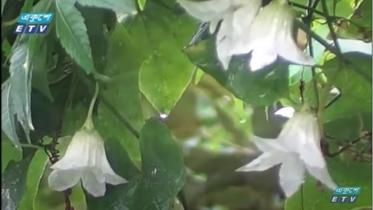 প্রাণ-প্রকৃতিতে ছড়াচ্ছে বর্ষার রূপ মুগ্ধতা (ভিডিও)