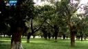 পরিচর্যার অভাবে মরে যাচ্ছে মুজিবনগর আম্রকাননের গাছগুলো
