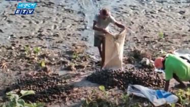 চলনবিলের জীববৈচিত্র্য হুমকির মুখে (ভিডিও)