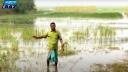 বোরো আবাদ নিয়ে শঙ্কায় কুষ্টিয়ার কৃষকরা (ভিডিও)