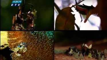 হুমকির মুখে উদ্ভিজ ও প্রাণিজের অনেক প্রজাতি (ভিডিও)
