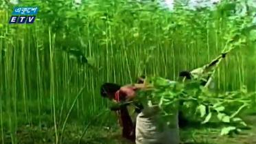 পিপিপি কিংবা জিটুজি-ই ফেরাবে পাটের সুদিন (ভিডিও)