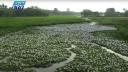 নাব্যতা হারিয়েছে কাজলা নদী (ভিডিও)