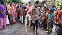 নাসিরনগরে এক সপ্তাহে মারা পড়েছে ১২টি গোখরা সাপ
