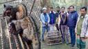 নাটোরে বিলুপ্তপ্রায় ২টি গন্ধগোকুল অবমুক্ত
