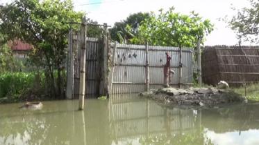 পদ্মায় ফের পানি বৃদ্ধি, চরম দুর্ভোগে বানভাসিরা