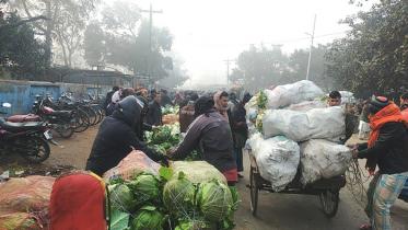 ঠাকুরগাঁওয়ে ফুলকপি-পাতাকপি গরুর খাদ্য হিসেবে বিক্রি