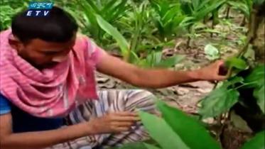 ১৫ বছর ধরে গাছ লাগাচ্ছেন বৃক্ষপ্রেমী আব্দুর রাজ্জাক (ভিডিও)