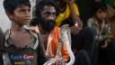 সাপের কামড়ে 'দশ লাখের বেশি' মানুষের মৃত্যু