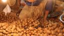 আজ থেকে ২৫ টাকায় আলু বিক্রি করবে টিসিবি