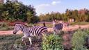 বঙ্গবন্ধু সাফারি পার্কে নির্ভয়ে ঘুরে বেড়াচ্ছে বন্যপ্রাণীরা