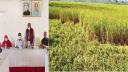 কারেন্টপোকা আতংকে ৪৫ হাজার কৃষক, ধান রক্ষার্থে জরুরি সভা
