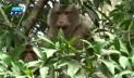 মৌলভীবাজারে বিপন্ন হচ্ছে প্রাণীকূল, বন হারাচ্ছে ভারসাম্য (ভিডিও)