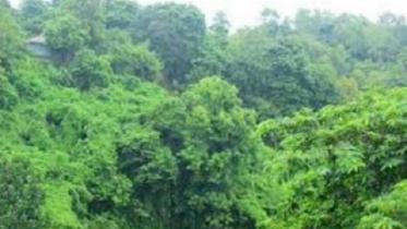 বনভূমিতে ৭০০ একর জমি বরাদ্দের আদেশ স্থগিত