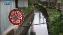 দেশের বর্জ্যপানিতে মিলছে করোনার জিন (ভিডিও)