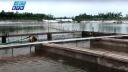যুক্তরাষ্ট্রের প্রযুক্তিতে মাছ চাষ হচ্ছে নাটোরে (ভিডিও)