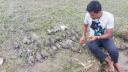 বিষাক্ত খাবারে প্রাণ হারাল ৭২টি ঘুঘু-কবুতর