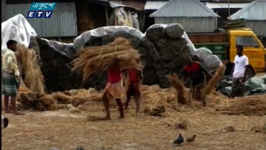 কুড়িগ্রাম ও গাইবান্ধায় গো-খাদ্য সংকট (ভিডিও)