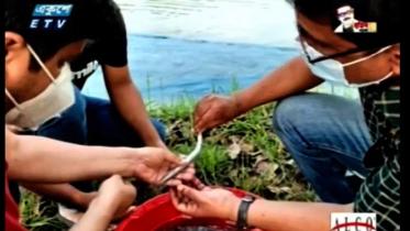 বিলুপ্ত কাকিলা মাছের কৃত্রিম প্রজননে সফলতা
