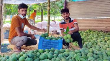 চাঁপাইনবাবগঞ্জে চাঙ্গা অনলাইন আমবাজার