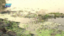 রাজধানীতে দাপট বেড়েছে মশার, পরিস্থিতি কতটা ভয়ঙ্কর? (ভিডিও)